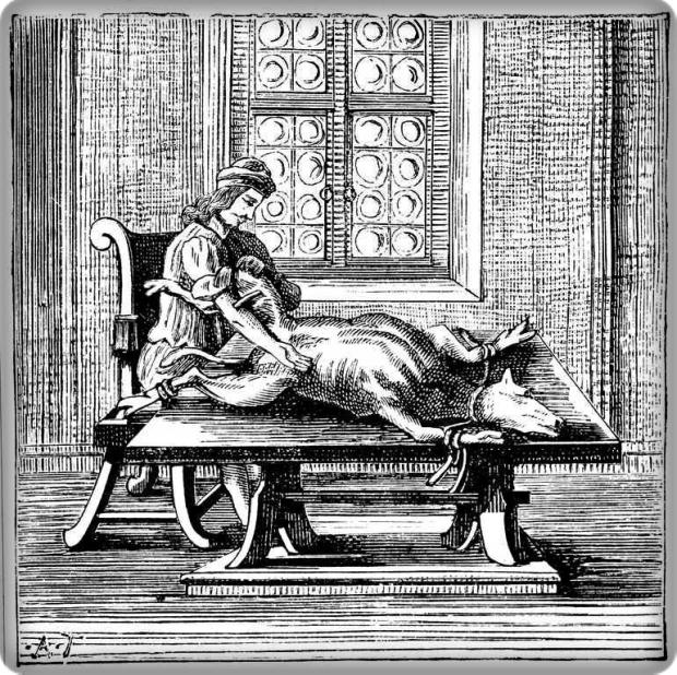 Transfusión de sangre de ternero. Frontispicio Tractatio Medica De Ortuño y occasu Transfusionis Sanguinis , Georg Abraham Mercklin, impreso en Nuremberg en 1679.