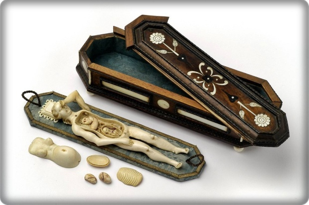 maniquí anatómico marfil